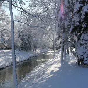 A stream in Northbrook by Barbara Cintado
