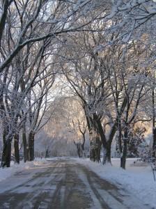 A street in Northbrook by Barbara Cintado